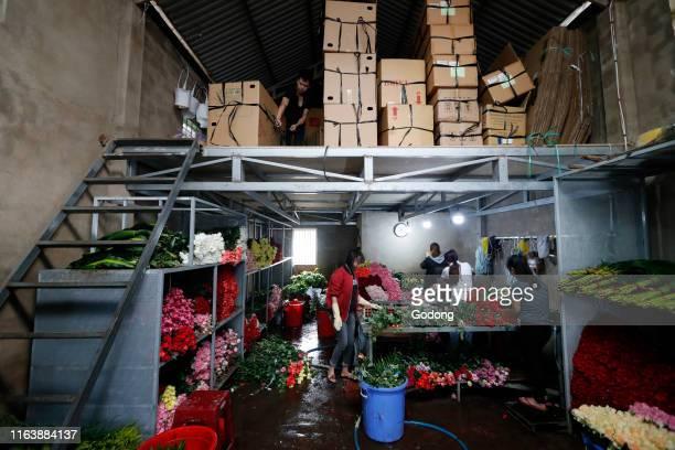 Women working in a flower factory Dalat Vietnam