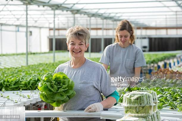 women working in greenhouse - gewächshäuser stock-fotos und bilder