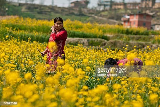 women working in mustard field - merten snijders photos et images de collection