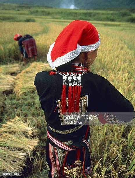 women working in the fields - hugh sitton stock pictures, royalty-free photos & images