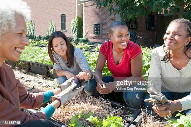 women working in urban organic community garden - newark new jersey stock pictures, royalty-free photos & images