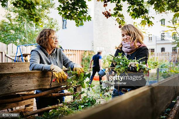 women working together in a community garden - urban garden stock pictures, royalty-free photos & images