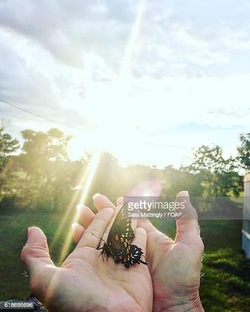 Women's hand holding butterfly