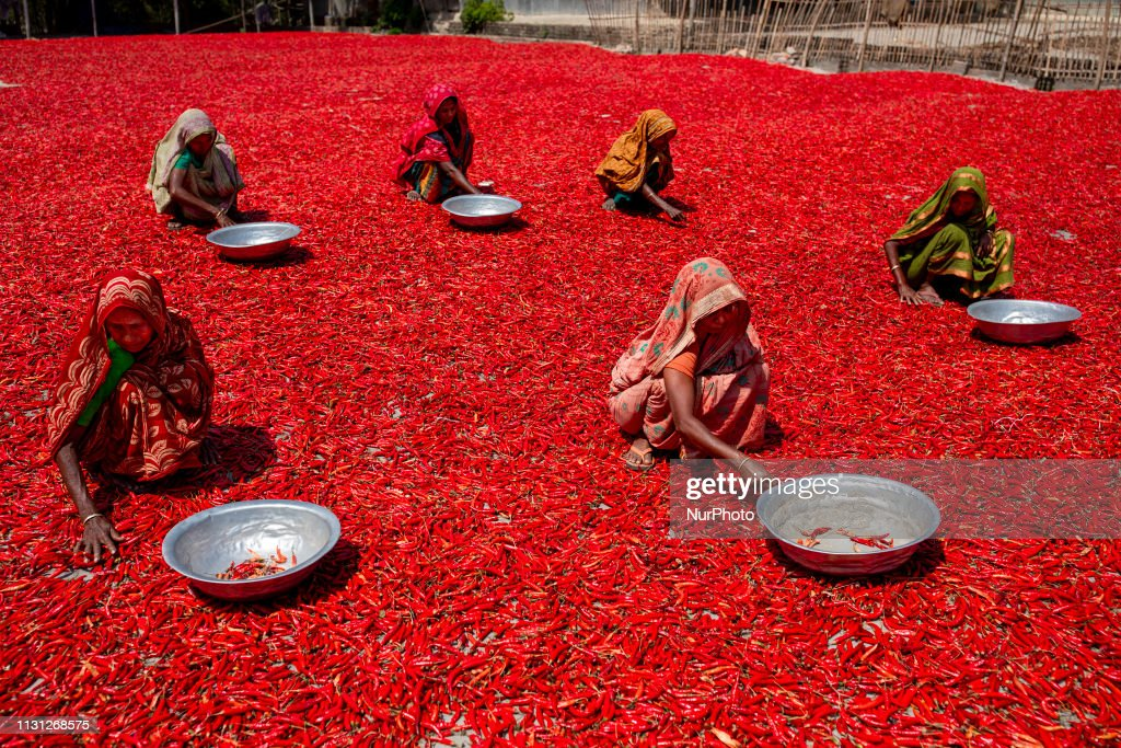 BGD: Red Chilli Pepper Processing In Bangladesh