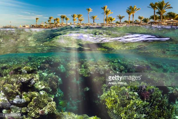 wonderful and beautiful underwater world with corals and tropical fish and palm trees. red sea, egypt - 熱帯魚 ストックフォトと画像