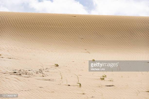 wonderful desert sandy dune nagliai nature