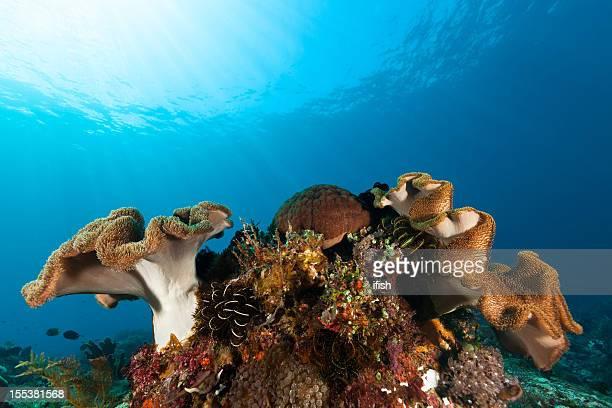 wonderful sea life bouquet, pura island, pantar strait, alor, indonesia - invertebrate stock pictures, royalty-free photos & images