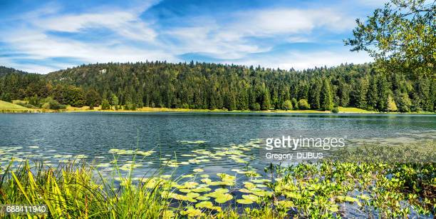 wonderful small altitude french genin lake in middle of wild pine forest in summer in jura mountains - auvergne rhône alpes stock photos and pictures