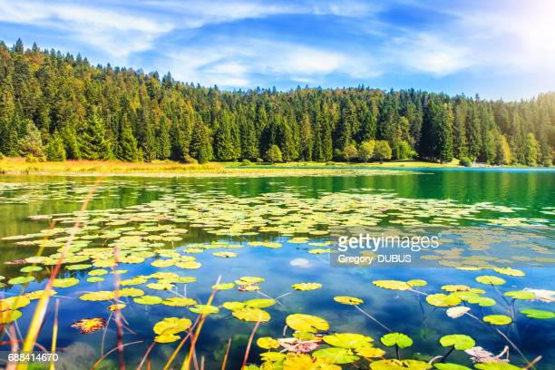 Wonderful small altitude french Genin lake in middle of wild pine forest in summer in Jura mountains