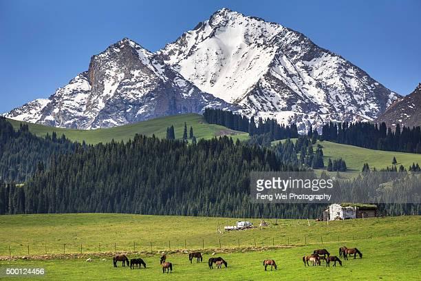 Wondering horse by Tian Shan Mountains, Xinjiang China