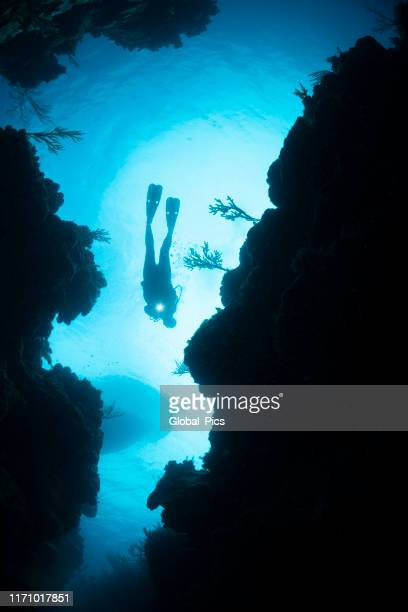 wonders of the sea - sea life stock pictures, royalty-free photos & images