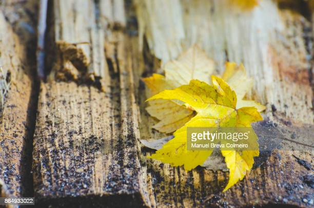 Wood and a leaf