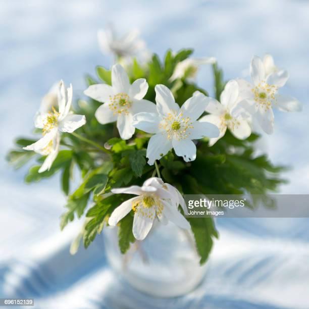 Wood anemones in vase