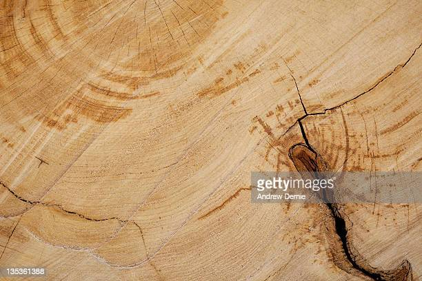 wood background texture - andrew dernie photos et images de collection