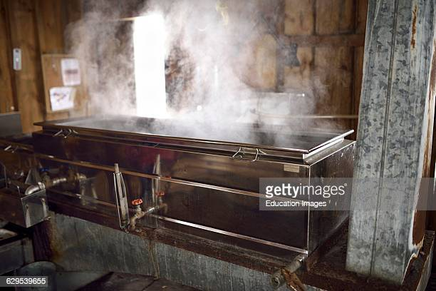 Wood burning evaporator with steaming sap for Maple syrup production in a sugar shack