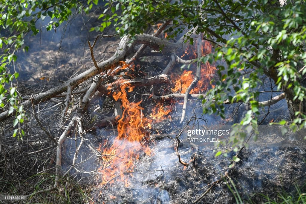 what to do during a forest fire