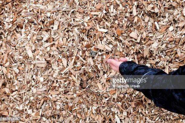 Wood chips for loading into biomass boiler
