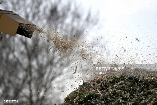 Wood chips land on a pile after municipal workers grind Christmas trees from the past holiday season in a woodchipper at a community park in...