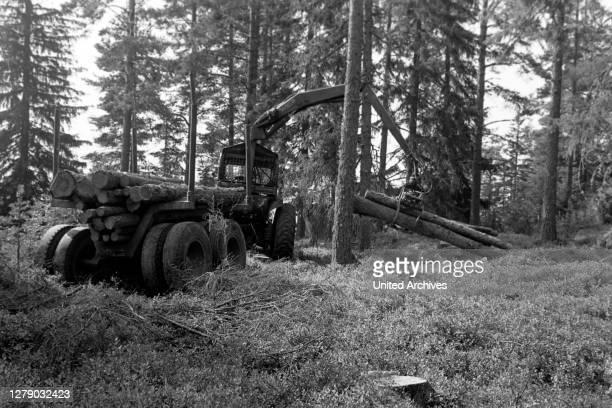 Wood clearance in Dalarna, Sweden, 1969.