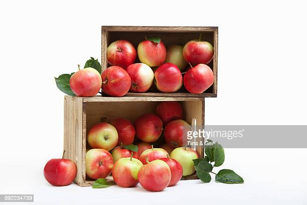 wood crates filled with fresh apples - apple fruit stock photos and pictures