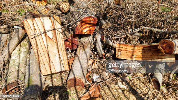 wood cut, after pruning and chopped. - crmacedonio stock pictures, royalty-free photos & images