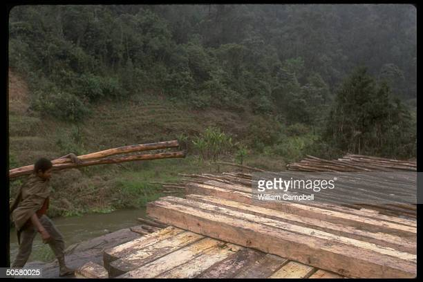Wood cut and stacked from rain forest trees re environmental impact incl greenhouse effect