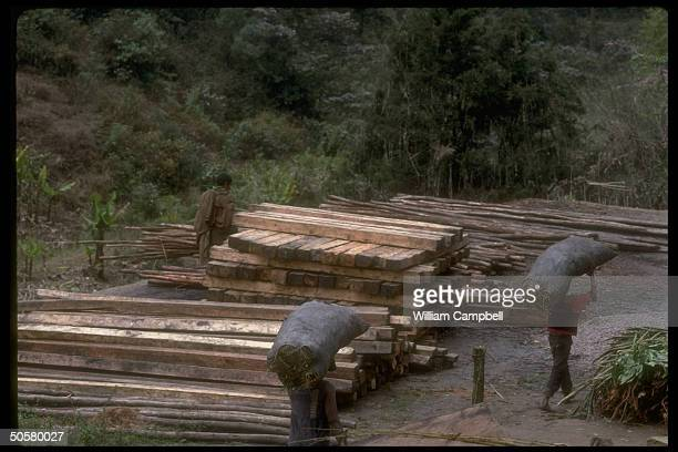 Wood cut charcoal made from rain forest trees re environmental impact incl greenhouse effect