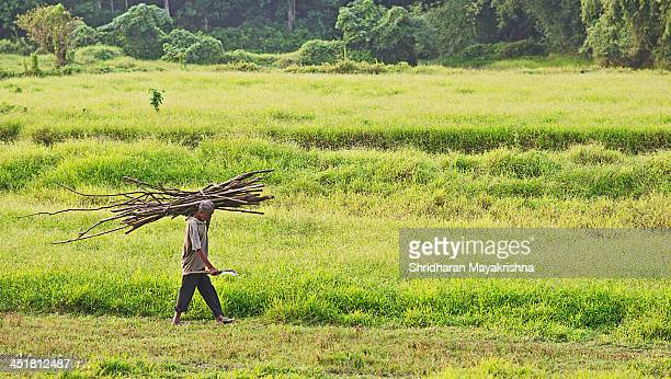 Wood cutter carrying back load of woods chopped to his house