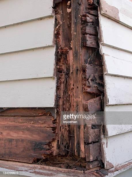 bois des dommages - termite photos et images de collection