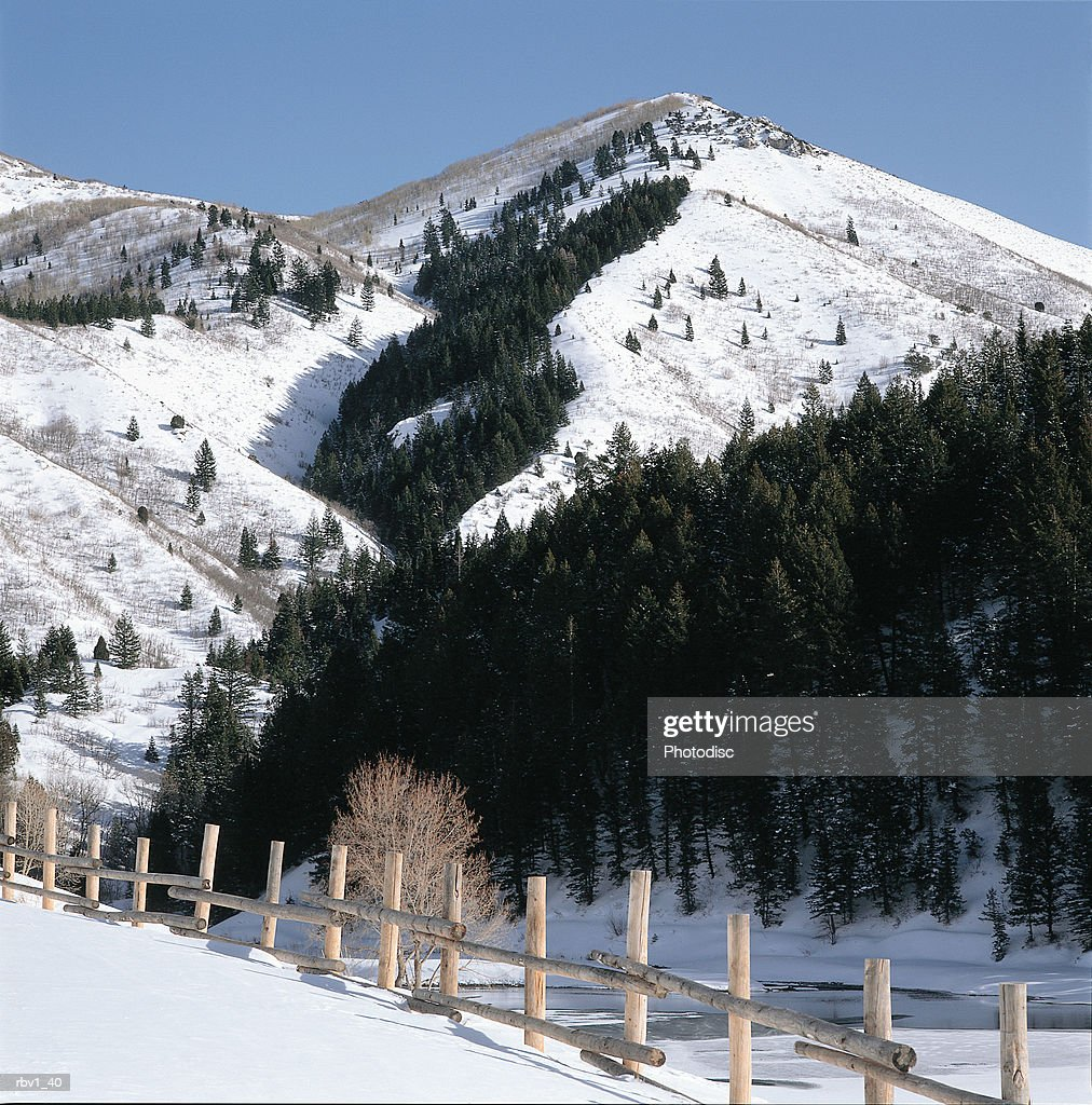 A wood fence and evergreens and other trees line the side of a mountain as snow covers the ground under a clear blue sky : Foto de stock