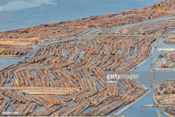 Wood floating in the water near a sawmill - Vancouver, Canada