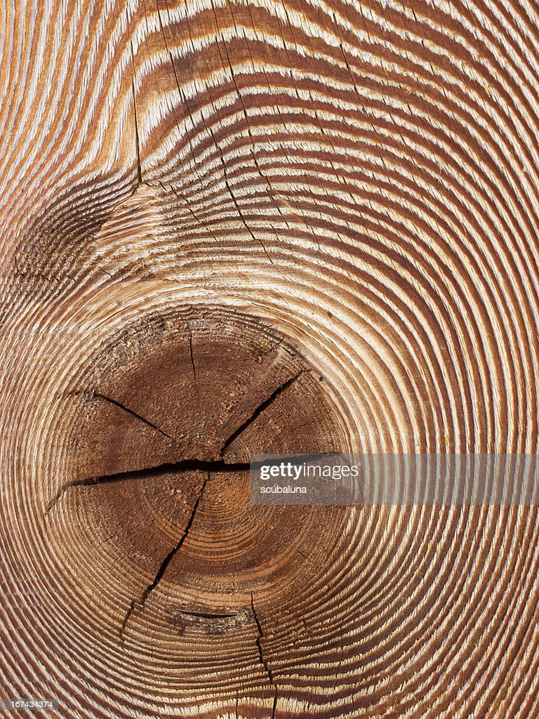 Wood grain : Stock Photo