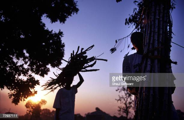 Wood is collected for cooking in the rural village of Dialakoto Senegal August 23 2001 In Senegal rural communities including Dialakoto home to about...