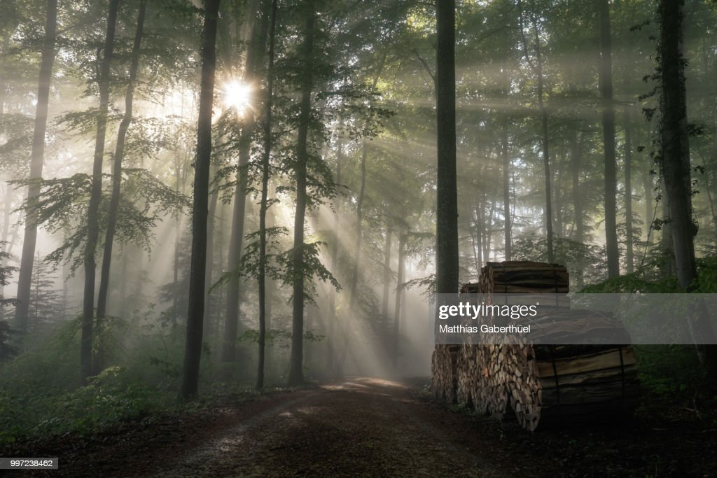 wood land : Stock-Foto