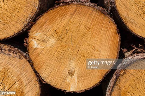 wood logs. timber logging - チーク ストックフォトと画像