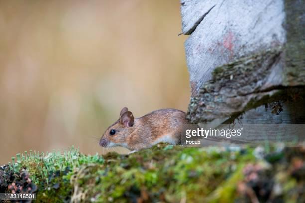 Jaanus JŠrva/Focus/Universal Images Group via Getty Images