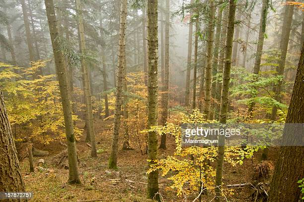 Wood near Camaldoli