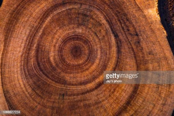 wood pattern - 地層 ストックフォトと画像