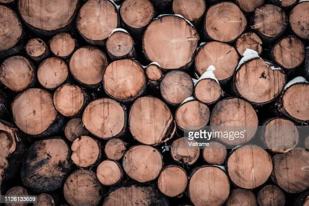 wood pattern - wood material 個照片及圖片檔