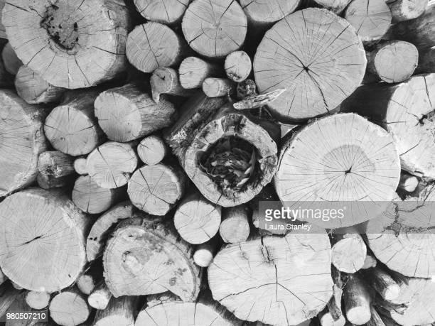 wood - laura rau stock-fotos und bilder
