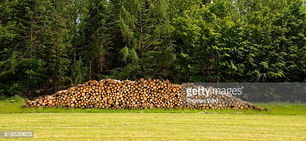 Wood pile at the edge of a forest