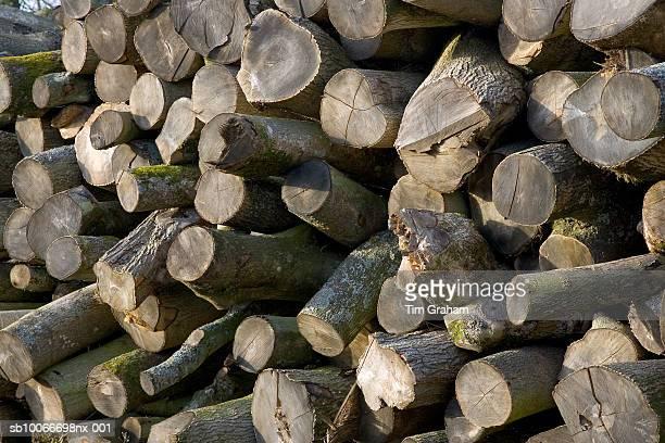 Wood Pile, Gloucestershire, UK