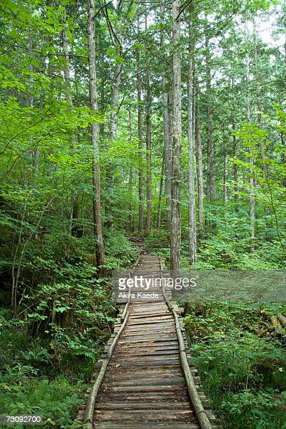 Wood plank path leading into forest