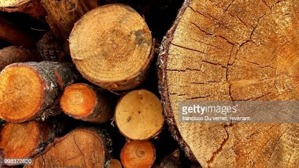 wood rolls! - ceppo foto e immagini stock
