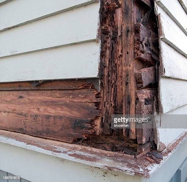 wood rot - rot stock pictures, royalty-free photos & images