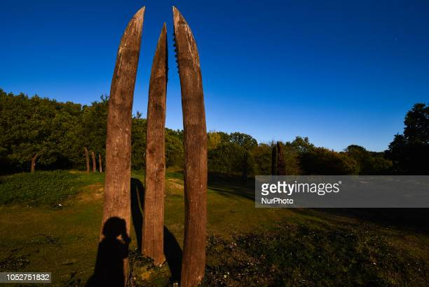 Wood sculptures are pictured at the Epping Forest woodhenge in East London on October 22 2018 The sculptures are created from oaks felled during the...