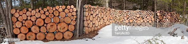 wood stack panorama - terryfic3d bildbanksfoton och bilder