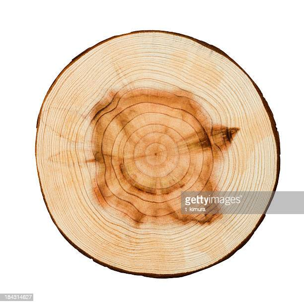 wood texture - tree trunk stock photos and pictures