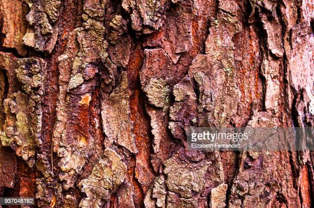 wood textures - bark stock pictures, royalty-free photos & images