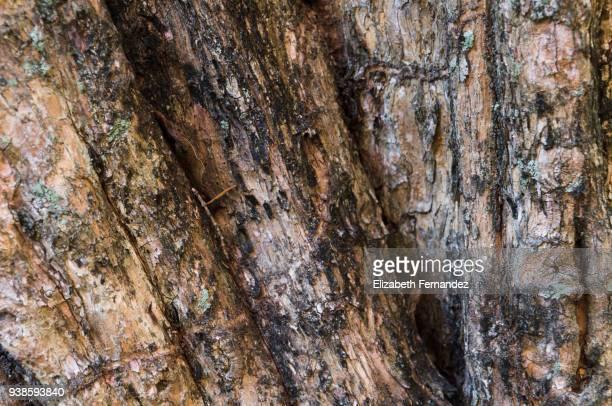 wood textures - acerola imagens e fotografias de stock